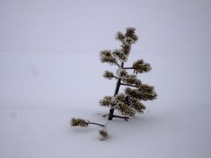 Luminen havupuun oksa törröttää hangesta esiin.