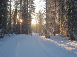 Luminen maisema metsässä.