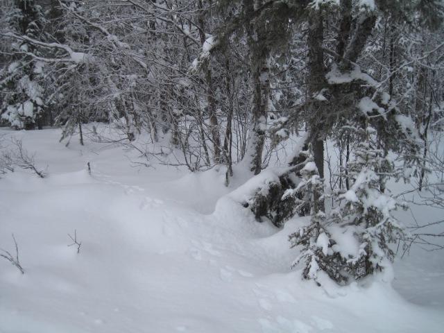 Luminen maisema metsästä.