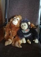 Kaksi apinapehmolelua istuvat toistensa kainaloissa.
