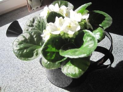 Kukka pöydällä.