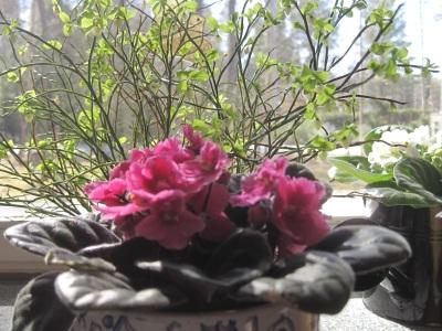 Kukkia ikkunalaudalla.