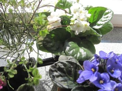 Kukkia pöydällä.