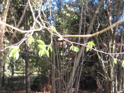 Metsässä kuvattuna puun oksa.