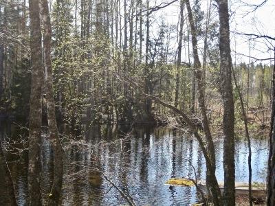 Järvi ja metsää.
