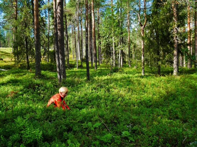 Mies on marjojen luona kyykyssä metsässä.