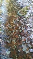 Jäätynyt puro.