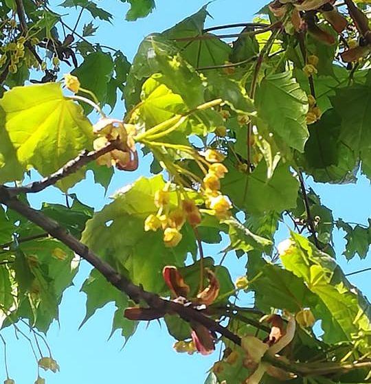 Vihreitä puun oksia.
