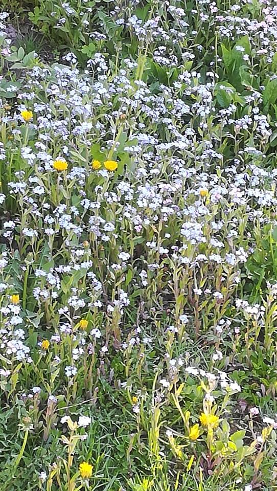 Maassa kasvavia kukkia.