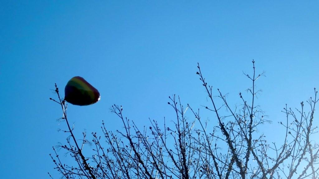 sinistä taivasta vasten näkyy vappupallo, joka on jäänyt kiinni korkealle puun oksaan.