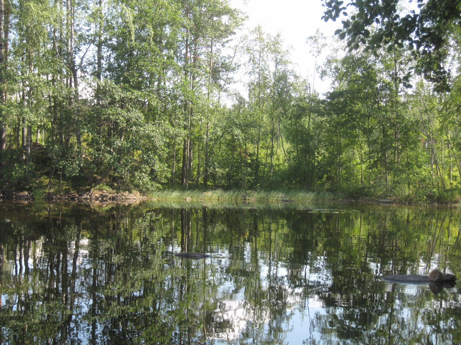 Metsää ja järvi.