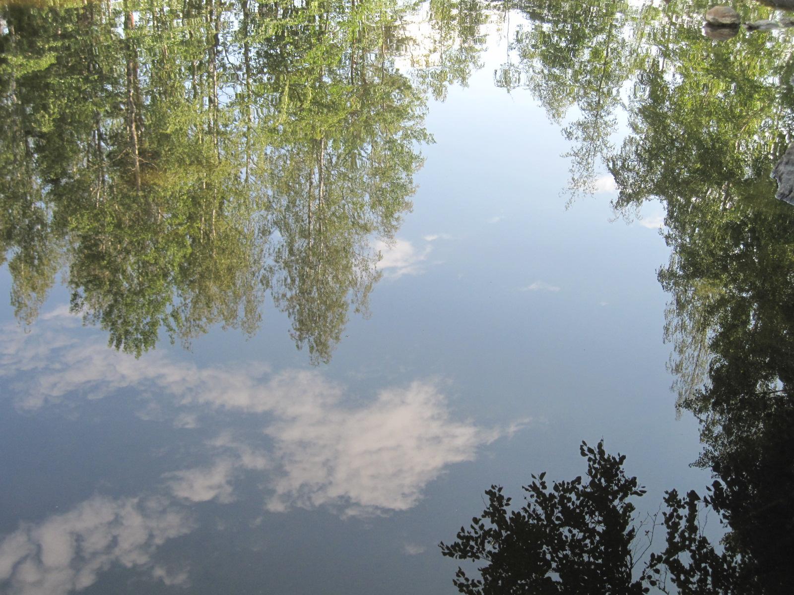 Järven pintaan heijastuvia puita.