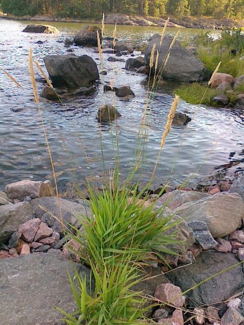 Kivisaaren kiviä vedessä ja maalla kuvattuna.
