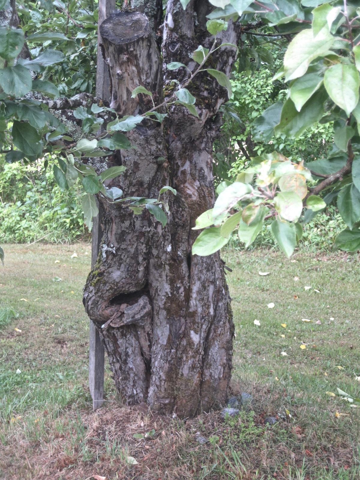 Vihreälehtinen puu.