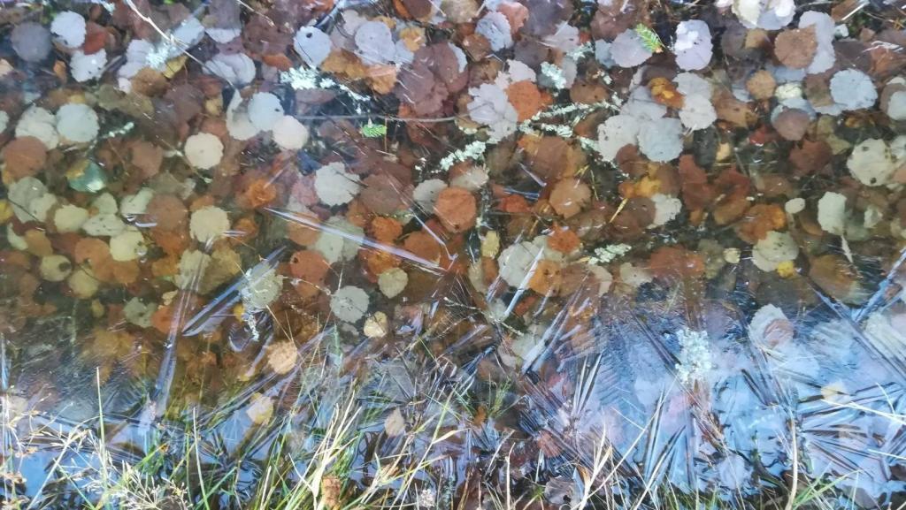 Syksyisiä lehtiä maassa jäätyneen vesilätäkön alla.