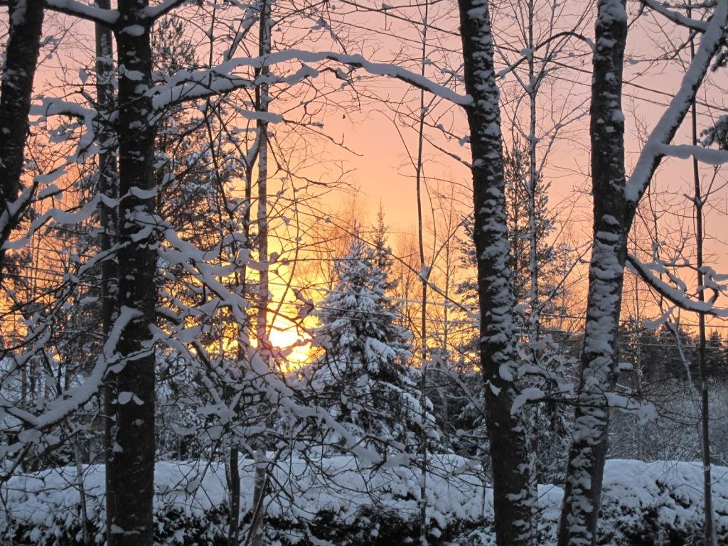 Auringonlasku lumisten puiden takana.