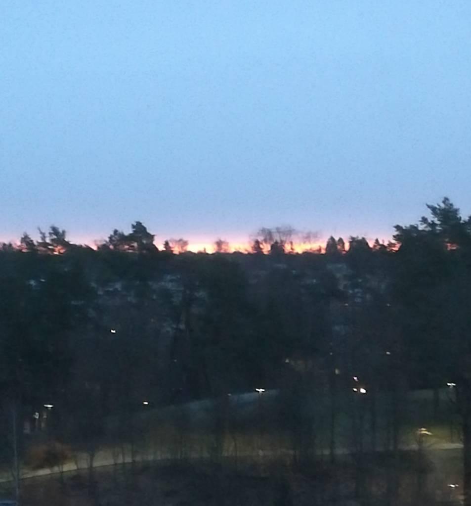 Kuvassa auringon kajo puiden latvojen takaa.