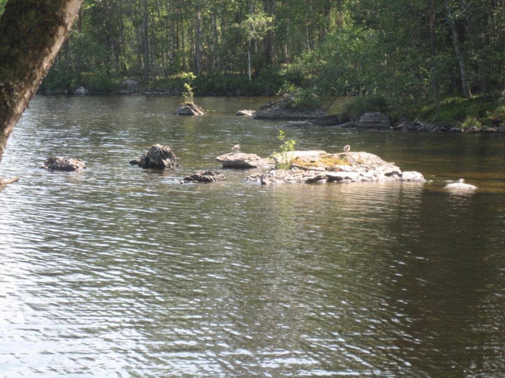 Järvellä nousee isoja kiviä pintaan, joiden päällä seisoo kaksi lintua.