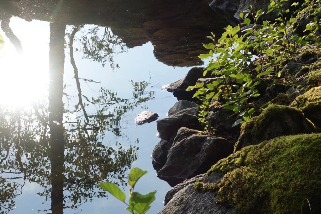 Rantakiviä, puiden heijastuksia veden peilissä.
