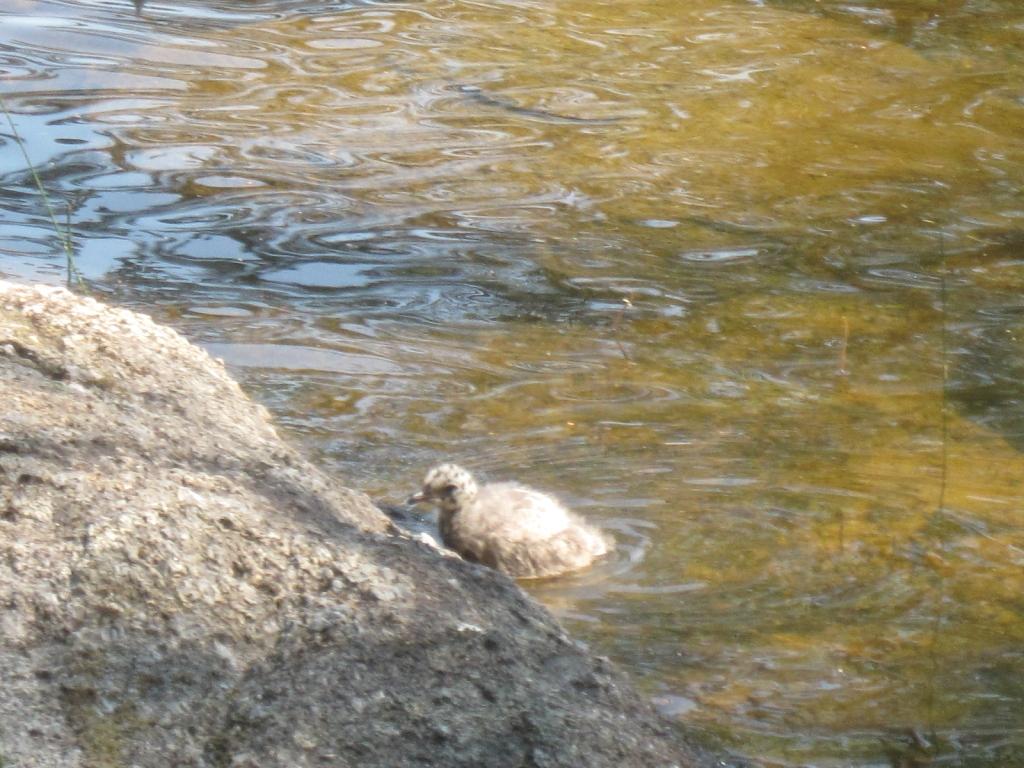 Poikanen ui vedessä.
