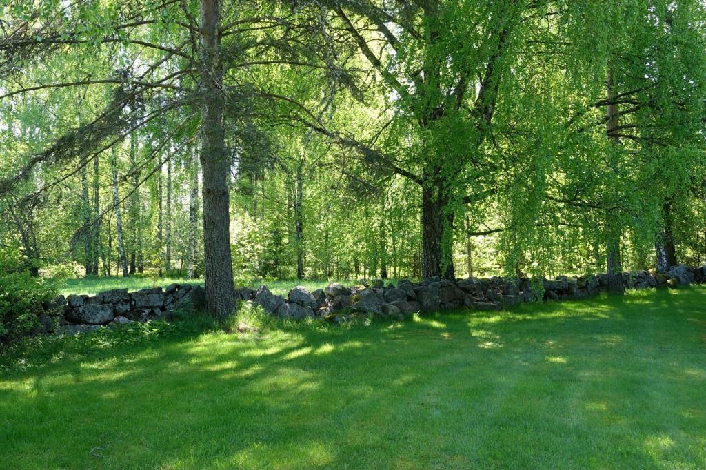 KIrkkomaan vanha muuri rajaa alueen. Kevään vehreys on kaikkialla.